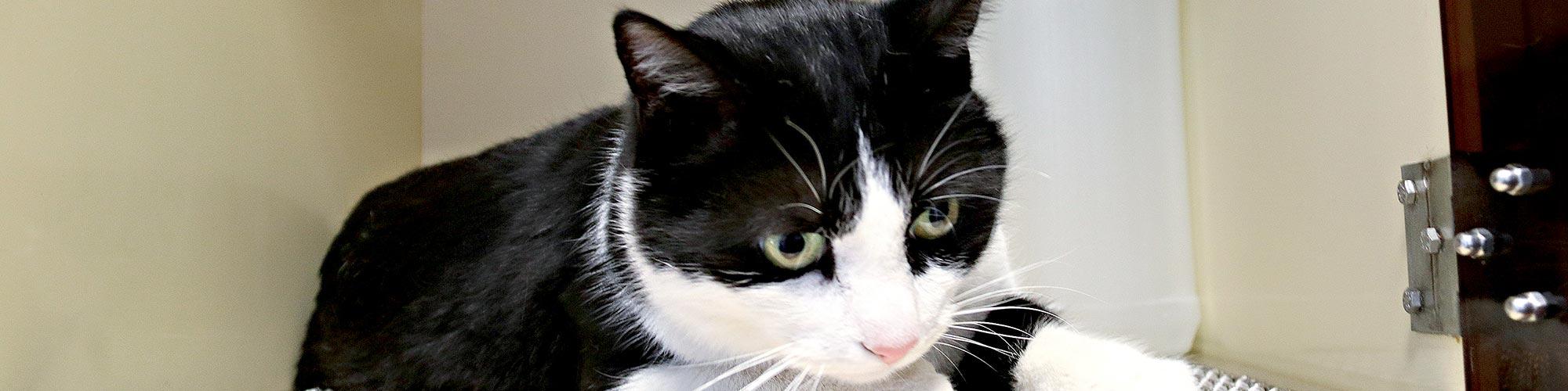 La clinique vétérinaire des Tilleroyes soigne les chats